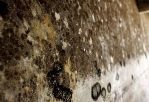 We inhale up to 10 billion mold spores daily; here's why you haven't died yet