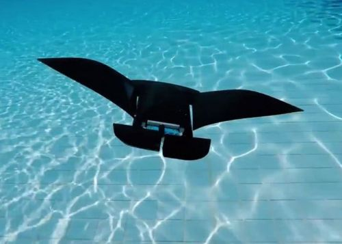 Robotic Manta Ray Created For Underwater Surveillance