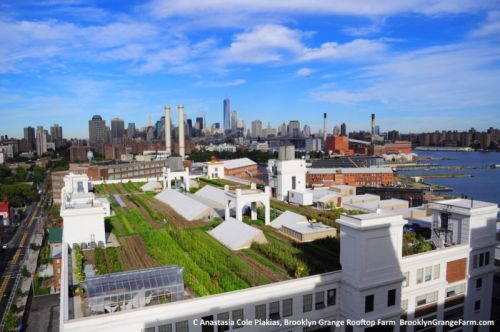 Urban farms could be incredibly efficient-but aren't yet