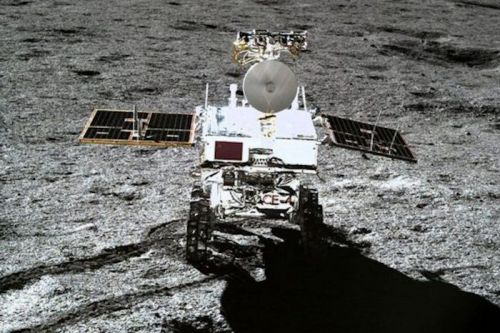 China Sprouts Cotton On The Moon