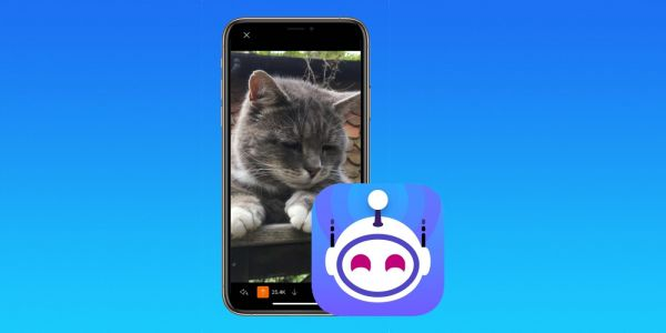 Apollo Reddit developer donating all proceeds from tomorrow's sales to SPCA animal shelter