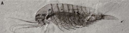 Spectacular trove of Cambrian fossils uncovered in China