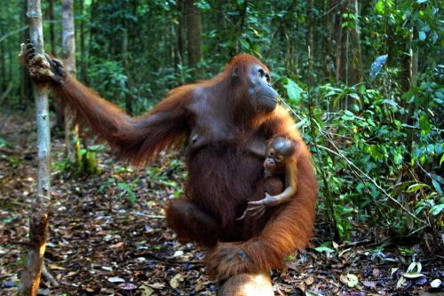 How Palm Oil Made Me Rethink the Definition of Kosher
