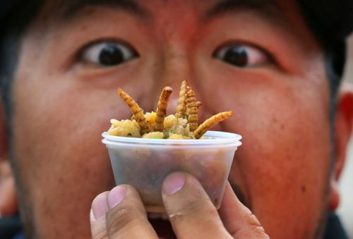 Forget the guilt trip: there's a better way to get people to eat more bugs