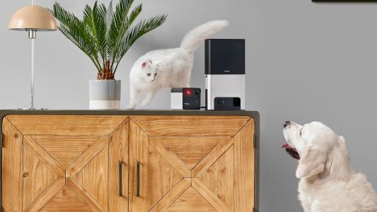 The best pet cameras: smart cameras to keep an eye on your furry friends