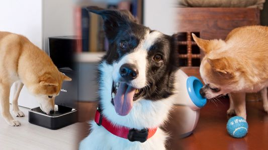 10 dog lover gifts to help upgrade your pet's life