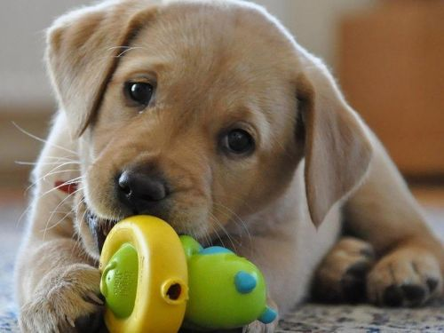 Become your dog's best friend with the best dog toys