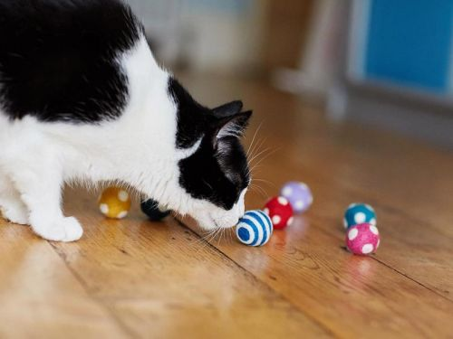 Keep your cat entertained with the best interactive cat toys