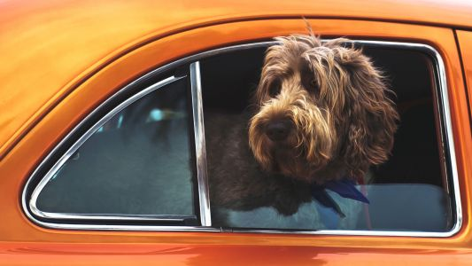 Tesla's Dog Mode could let passers-by know your pet isn't overheating